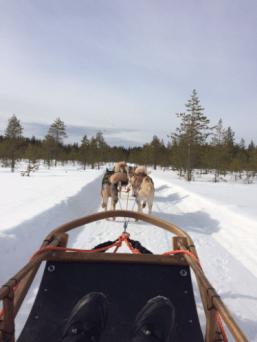 Husky sled right at Arctic Circle Husky Park.
