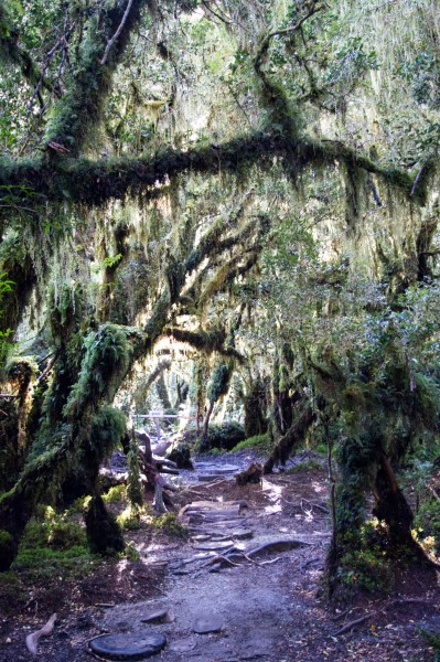 The Bosque Encantado: planning a trip to Patagonia