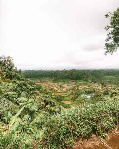 10 Best Places to Instagram in Bali: Selat Rice Fields