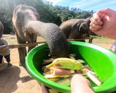 Ethical Elephant Sanctuaries in Chiang Mai