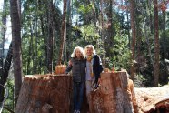 Tahune AirWalk, Tasmania - Wyndham timeshare Onwer