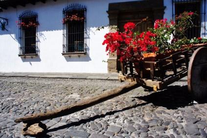Flowers in the street