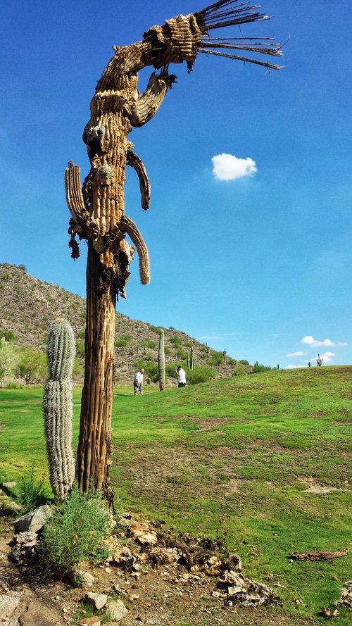 Johnson Ranch Golf Club | San Tan Valley, AZ