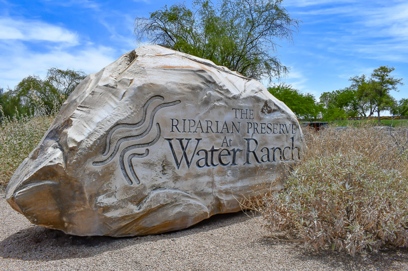Riparian Reserve at Water Ranch