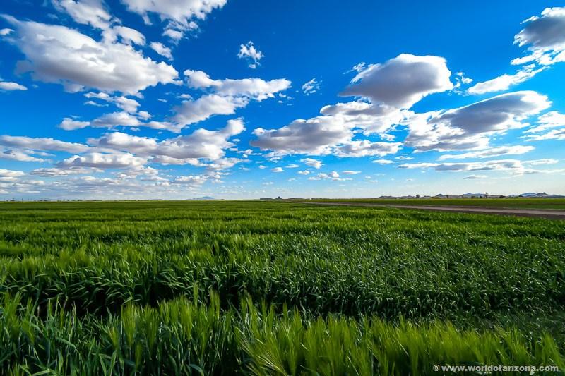 Agriculture | San Tan Valley, AZ