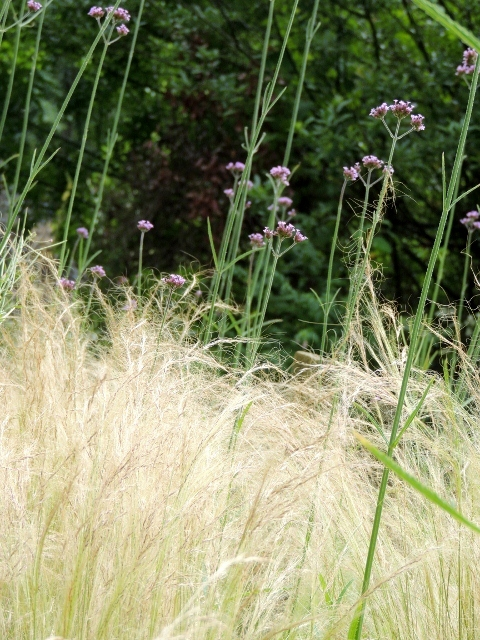 The grasses in the Circle Garden by Stephanie Woods