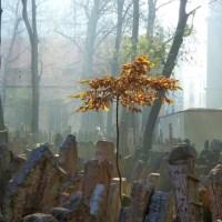 Prague - The old Jewish cemetery (Starý židovský hřbitov)