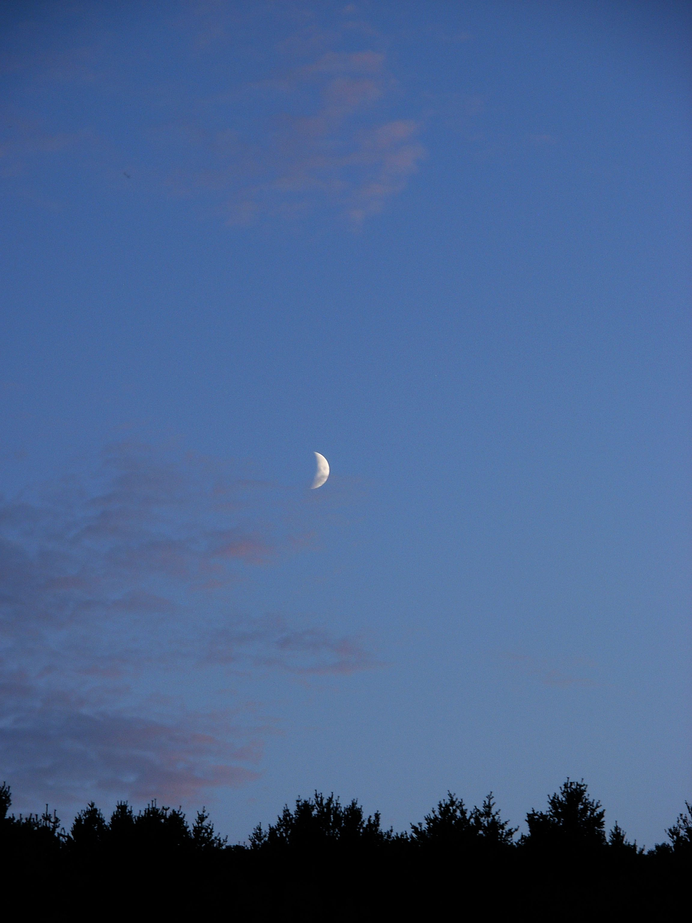rising crescent over the Owl's Head Blueberry Farm