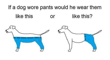 Dog-Pants
