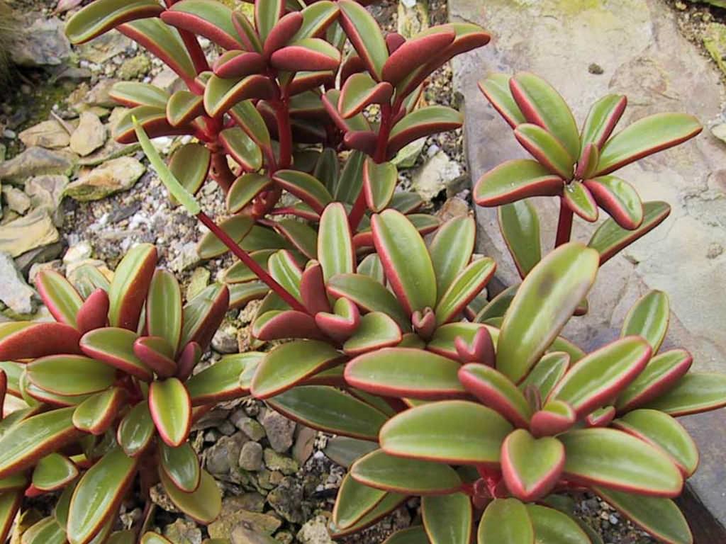 Succulent Plants Uses
