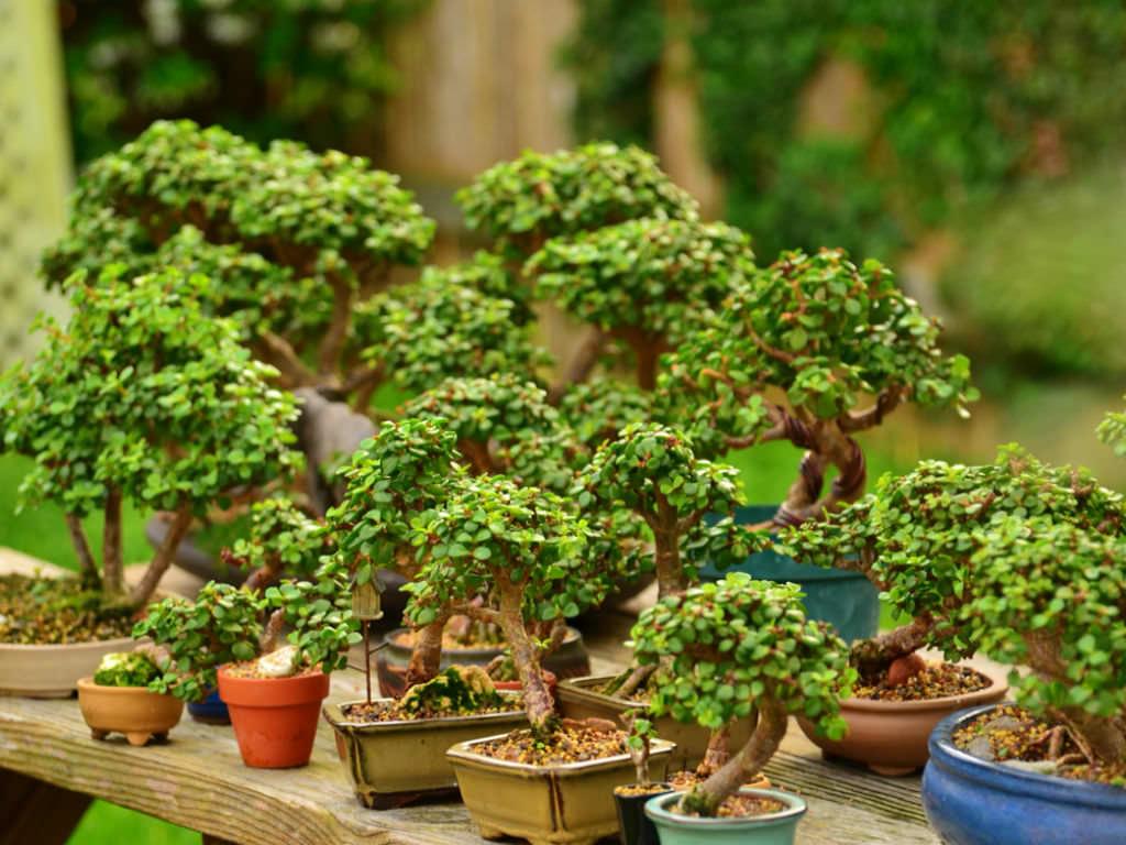 Mini Succulents Care