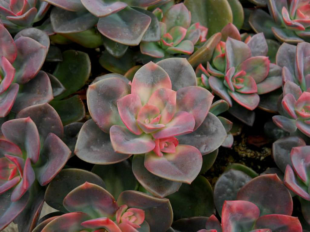Cactus Plant Care