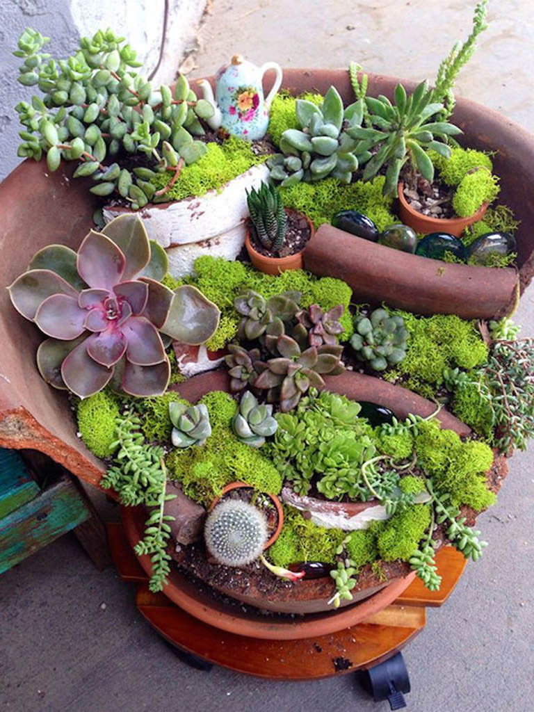 Pots Miniature Flower