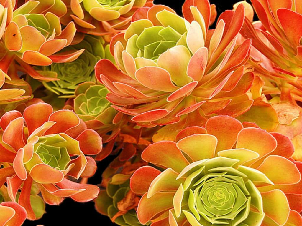 Tall Succulent Plants