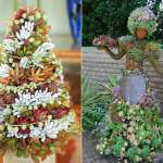How To Make A Succulent Topiary World Of Succulents
