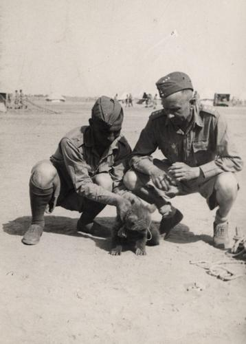 Baby bear being petted by a pair of soldiers