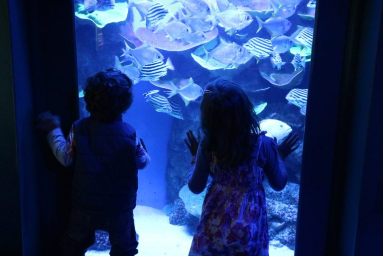 AQWA with Kids, Aquarium of WA with Kids, Aquarium of WA family visit