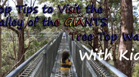 valley of the giants tree top walk, tips to visit tree top walk, visit valley of giants with kids, tips to get the best out of your visit to the tree top walk