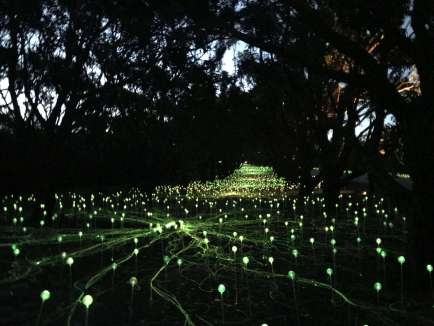 Field of Light Western Australia