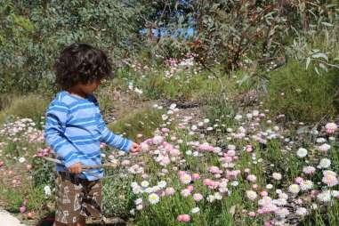 Wildflowers at Kings Park Perth