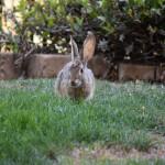 Bunny eye to eye12