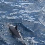 Dolphin12