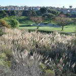 Golfcourse12