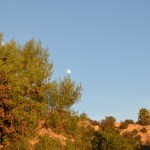 Moon on the tree12