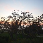 Sunset behind a tree12