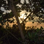 Sunset thru tree branches12