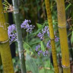 Blue flower amongst bamboo12