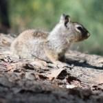 Squirrel baby12