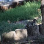 Squirrel on watch12