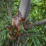 Tree on tree12