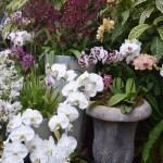 Orchids12