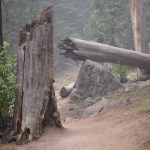Broken tree12