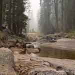 Creek amongst trees12