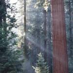 Sunrays amongst the trees12