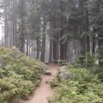 Trail amongst trees12