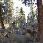Along the Castle Rock trail12