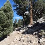 Cougar Crest trail12