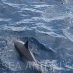 Dolphin12SA