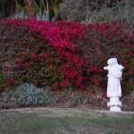 White fire hydrant12