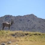 Kudu12