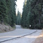 curving-road-in-sequoia12
