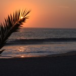 red-sunset-behind-palm-leaf12
