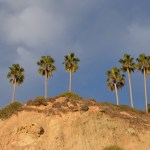 Palms on the cliff12