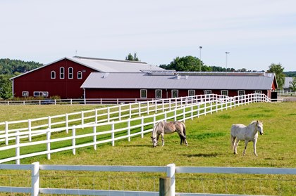 horse-farm-with-horses-in-pasture