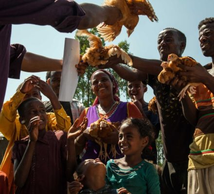World Poultry Foundation with EthioChicken in Ethiopia