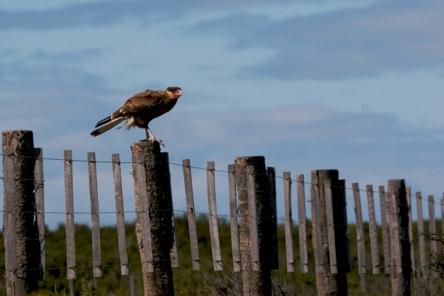 Bird Onthe Fence
